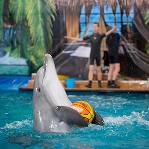 Дельфинарии, океанариумы Крюково