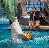 Дельфинарии, океанариумы в Крюково